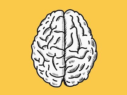 Lateralidad del Cerebro